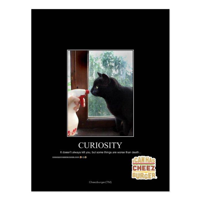 Curiosity Postcard