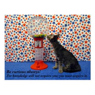 Curiosity - Starring Kori the Rescue Kitty Postcard