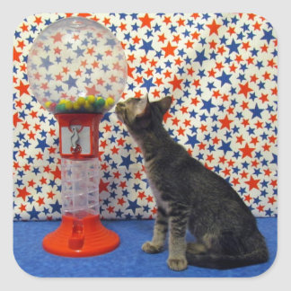 Curiosity - Starring Kori the Rescue Kitty Square Sticker