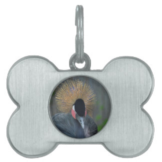 Curious African Crowned Crane Pet ID Tag