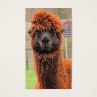 Curious Alpaca ~ biz card