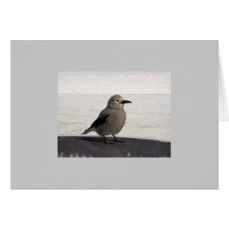 Curious Avian Card