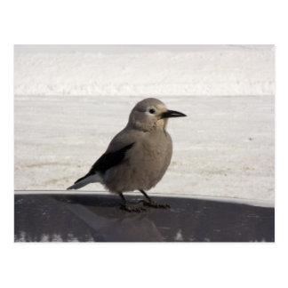 Curious Avian Postcard