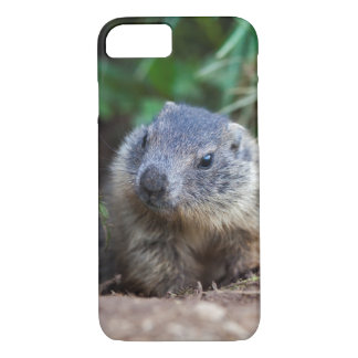 Curious Baby Marmot iPhone 7 Case
