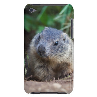 Curious Baby Marmot iPod Touch Case