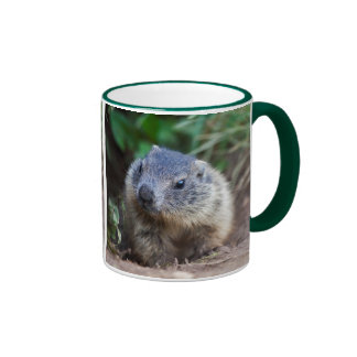 Curious Baby Marmot Mug