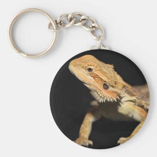 Curious Bearded Dragon 3 Keychains
