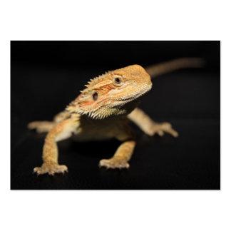 Curious Bearded Dragon Large Business Card