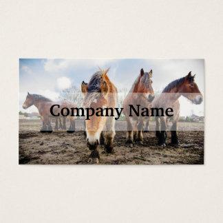 Curious Belgian Draft Horses From Below Business Card