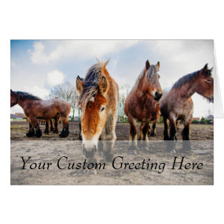 Curious Belgian Draft Horses From Below Card