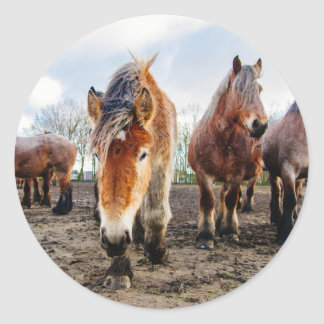 Curious Belgian Draft Horses From Below Classic Round Sticker
