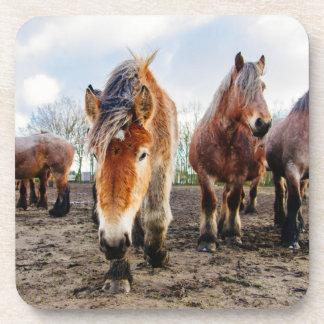 Curious Belgian Draft Horses From Below Coaster