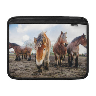 Curious Belgian Draft Horses From Below MacBook Sleeve