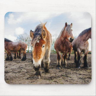 Curious Belgian Draft Horses From Below Mouse Pad