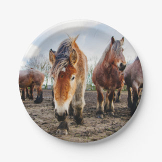 Curious Belgian Draft Horses From Below Paper Plate