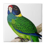 Curious Bird Blue Green Yellow Parrot Tiles
