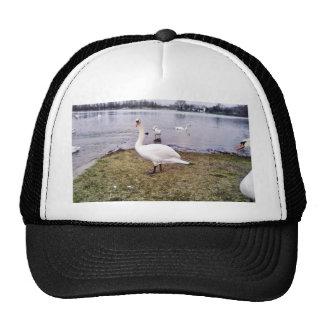 Curious Bird White Swan Trucker Hat