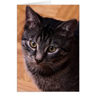 Curious Black and Back Tabbycat Card