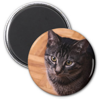 Curious Black and Back Tabbycat Fridge Magnets