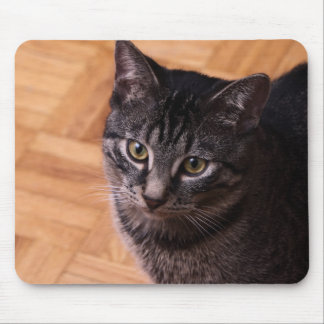 Curious Black and Back Tabbycat Mouse Pad