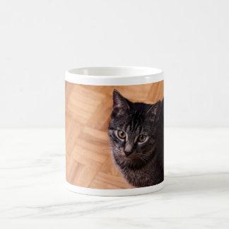 Curious Black and Back Tabbycat Classic White Coffee Mug