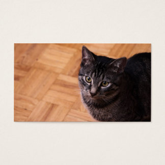 Curious Black and Grey Tabbycat Business Card