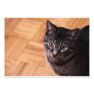 Curious Black and Grey Tabbycat Card