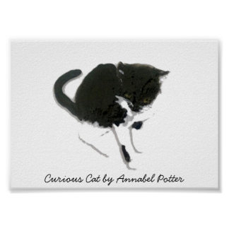 Curious Black and White Cat Art Poster