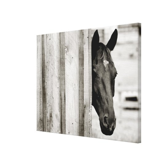 Curious Black Horse Canvas Print
