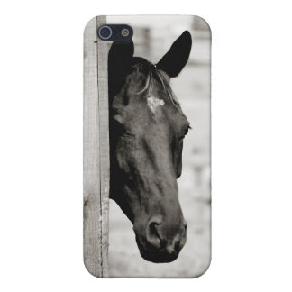 Curious Black Horse Case For iPhone SE/5/5s