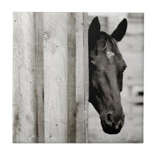 Curious Black Horse Ceramic Tile