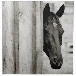 Curious Black Horse Cloth Napkin