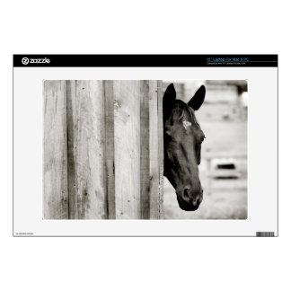Curious Black Horse Laptop Decal