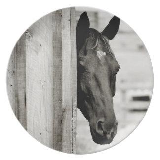Curious Black Horse Melamine Plate