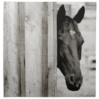 Curious Black Horse Napkin