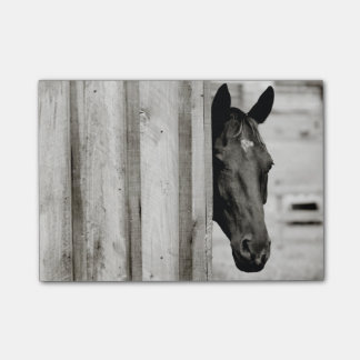 Curious Black Horse Post-it Notes