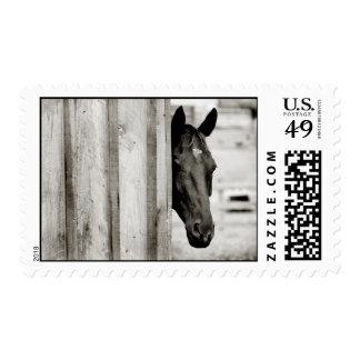 Curious Black Horse Postage