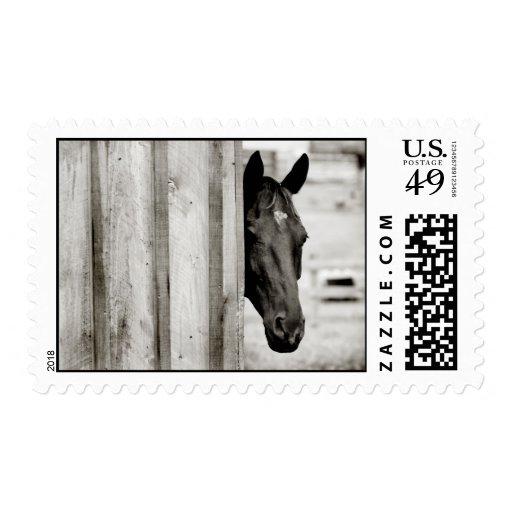 Curious Black Horse Stamp