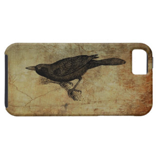 Curious Blackbird Crow Grackle Raven iPhone 5 Covers