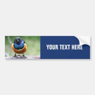 Curious Blue Bird Photo Closeup Car Bumper Sticker