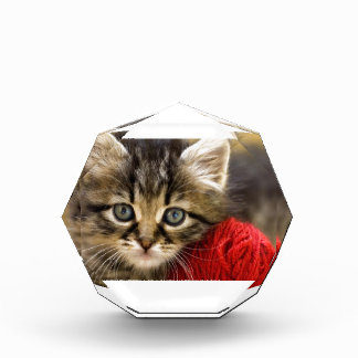 Curious Blue Eyed Kitten With a Red Ball of Yarn Award