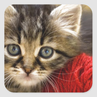 Curious Blue Eyed Kitten With a Red Ball of Yarn Square Sticker