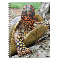Curious Box Turtle Notebook