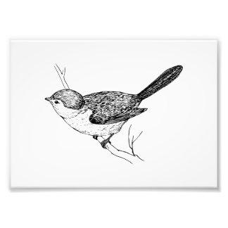 Curious Bushtit Bird Sketch Photo Print