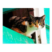 Curious Calico Cat on aquamarine ledge Postcard