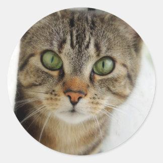 curious cat classic round sticker