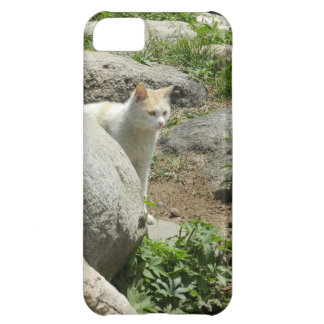 Curious Cat Cover For iPhone 5C