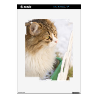 Curious cat decals for iPad 2