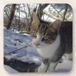 Curious Cat Drink Coaster