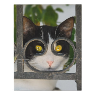 Curious Cat Eyes with Spectacles Frame Funny Photo Faux Canvas Print